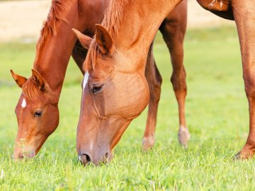 mare & foal grazing